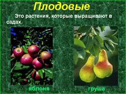 Детские презентации Детская презентация Культурные растения  Растения которые человек сам высаживает ухаживает за всходами собирает урожай использует в пищу называют культурными Культурные растения бывают