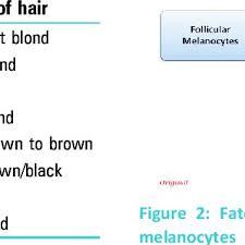 Fischer Saller Scale Chart The Fischer Saller Scale To Determine The Shades Of Hair