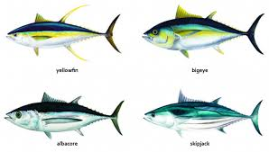 Samoan Fish Chart Fisheries In The Pacific Overview Of Tuna Fisheries Stock