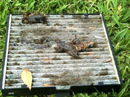 Vent System Help Dead Rotting Animal In Air Vent System Clublexus Lexus