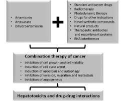 type of drugs cancer combination therapies with artemisinin type drugs sciencedirect