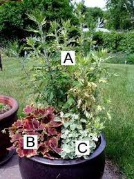 Small Picture Pictures of Flowers Great Container Garden Recipes