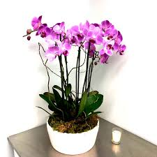 Buy orchids online at nurserylive | Largest plant nursery in India