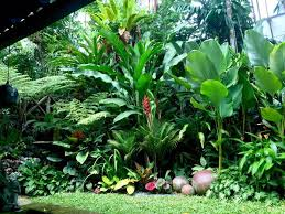 Small Picture 61 best Subtropical gardens plants images on Pinterest