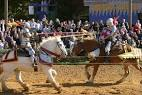 Images & Illustrations of joust