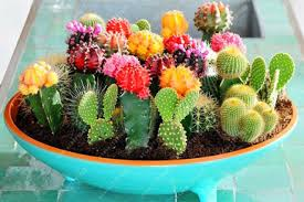 100 pcs mix cactus seeds rare succulents plant for home garden decoration