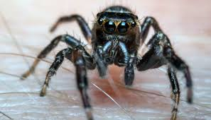 spider bites identification and treatment