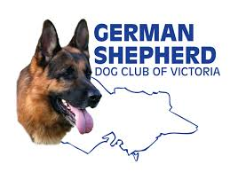 German Shepherd Exercise Chart Exercising Your Puppy German Shepherd Dog Club Of Victoria