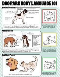 Dog Body Language Chart The Clues To Your Pets Well Being