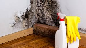 the truth about toxic mold and how to