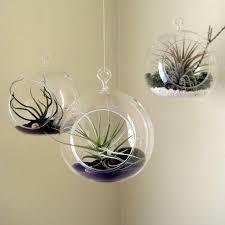 6pcs set hanging air plant holder 10cm globe terrariums 4 5 inch indoor garden planters 6 inch diy terrarium