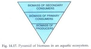 essay on ecological pyramid ecosystem ecology environment pyramid of biomass in an aquatic ecosystem