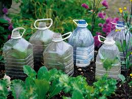 Diy Water Bottle Cloches And Cold Frames Diy