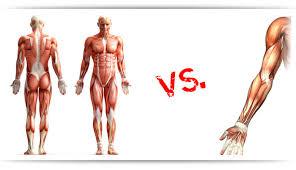 full body workout vs split routine