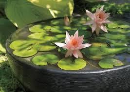 guest column ponds in pots create