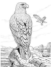 Small Picture realistic animal coloring pages for adults coloring kids