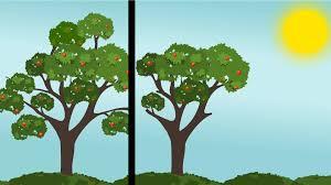 Problems With Plum Trees Common Diseases Of Plum TreesPlum Tree Flowers But No Fruit