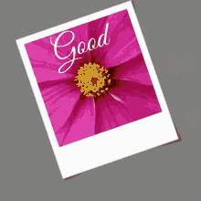 good morning my love gif goodmorning mylove flowers gifs