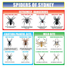 Spider Identification Chart Australia How To Identify Spiders In Your Home Kknockout Pest