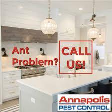 annapolis pest control. Contemporary Control With Annapolis Pest Control A