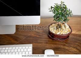 office bonsai. Bonsai Ficus Plant Computer Office Desk O