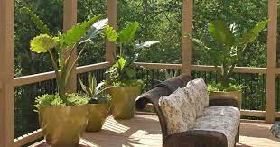 patio plants for container gardening