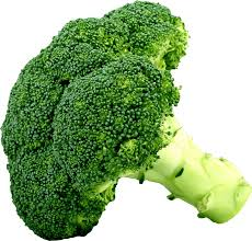 broccoli clipart. Interesting Broccoli Picture Library Big Image Png Stock Broccoli Clipart For Clipart T