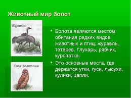Мир Болот Беларуси Реферат Животный Мир Болот Беларуси Реферат