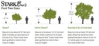 Grimes Golden West Virginia 1804  3995  Trees Of Antiquity Dwarf Fruit Trees Virginia