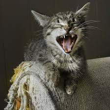 Four Great Tips for Keeping Kitty Claws out of Your Furniture