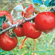 Growing Fruit Trees In Containers  HGTVFull Size Fruit Trees For Sale