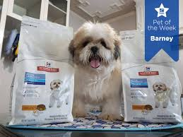 5 questions with aligned speaker keith lehman from hill s pet nutrition