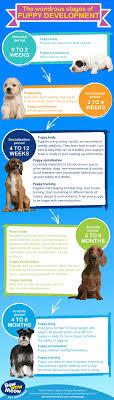 Puppy Development Stages Newborn Milestones Growth Charts