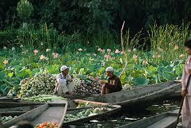 the floating market on lake dal srinagar kashmir