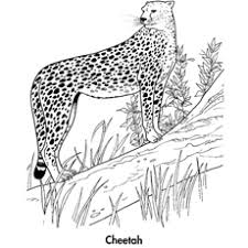 750x1000 cheetah coloring pages baby cheetah coloring sheets cheetah. 25 Best Cheetah Coloring Pages For Your Little Ones