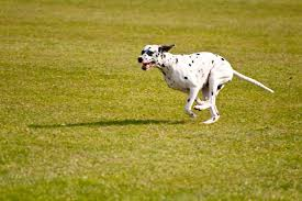 How To Build A Dog Run Healthy Dogs Animal Planet