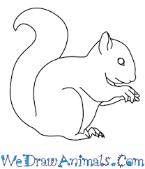 Small Picture How to Draw a Red Squirrel