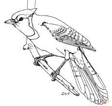 Small Picture Blue Jay Bird coloring page Free Printable Coloring Pages