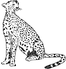Small Picture Free Cheetah Coloring Pages