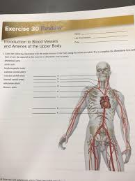 Major arteries by definition, an artery is a vessel that conducts blood from the heart to the periphery. What Are The Major Blood Vessels In The Body The Heart And Blood Vessels Cab Design