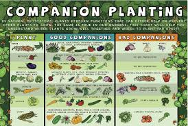 Small Picture Lovable Companion Planting Vegetable Garden Design Vegetable
