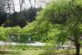 pond at clark botanic garden