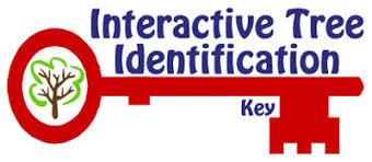 Interactive Tree Identification Key Natural Resource