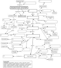Concept map: digestive system   N U R S I N G S C H O O L ...