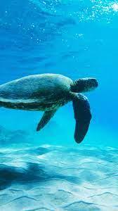 Sea Turtle Wallpaper Iphone - New ...