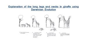 Darwin  evolution    natural selection  article    Khan Academy besides Natural Selection   Evidence Of Evolution Worksheet   The Best and furthermore natural selection – Science with Mrs  Barton additionally Evolution By Natural Selection Worksheet Key   Fts e info besides Social Darwinism Worksheet   The Best and Most  prehensive in addition Darwin s Natural Selection Worksheet also Icons of Evolution Worksheet   Charles Darwin   Evolution as well  likewise Darwin's Theory of Evolution Worksheet   Chapter 15 Theory of moreover Worksheet   Calleveryonedaveday besides Darwin's Natural Selection Worksheet – Guillermotull. on darwin s natural selection worksheet