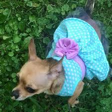 Xs Dog Attire Mint Green Dress Xs New
