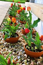 Small Picture Best 25 Patio plants ideas on Pinterest Potted plants Growing