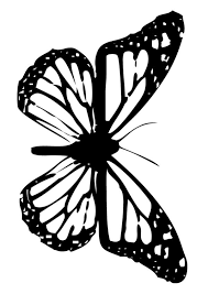 Small Picture Common jezebel butterfly coloring pages Hellokidscom