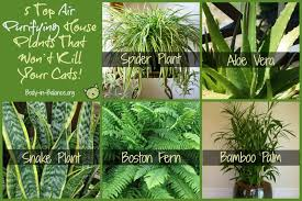 Extraordinary Plants That Are Not Toxic To Cats Images - Best idea .